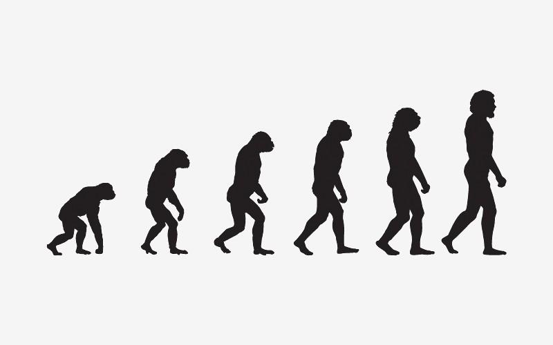 evolutie-800x500